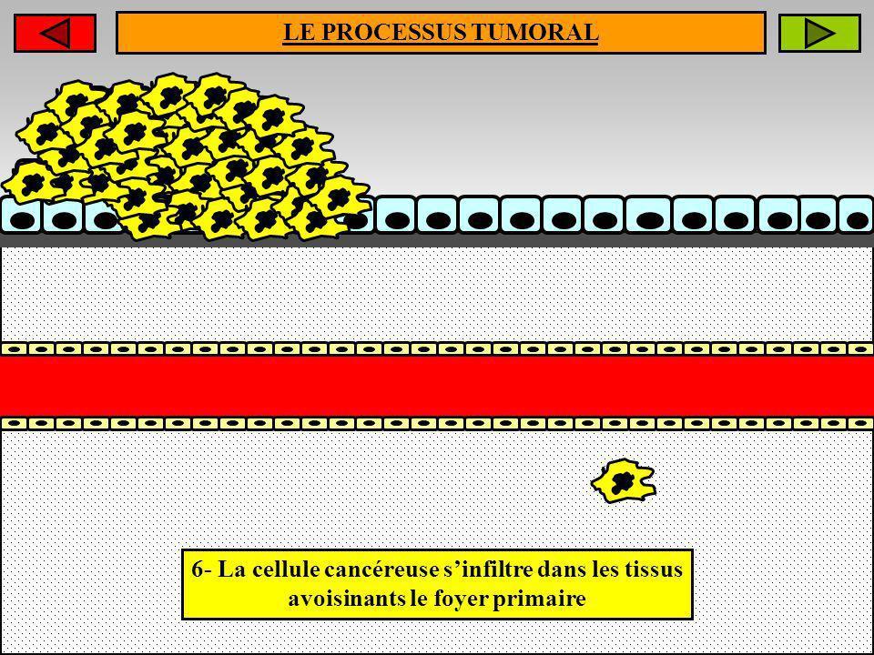 LE PROCESSUS TUMORAL6- La cellule cancéreuse s'infiltre dans les tissus avoisinants le foyer primaire.