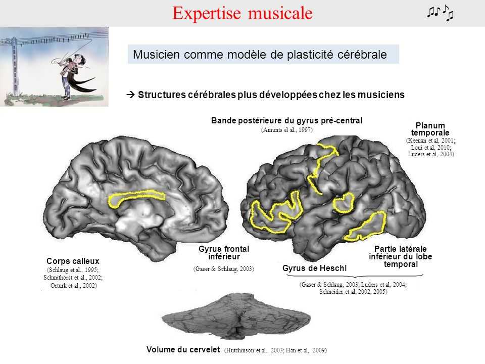 Expertise musicale ♪ ♫♪ ♫