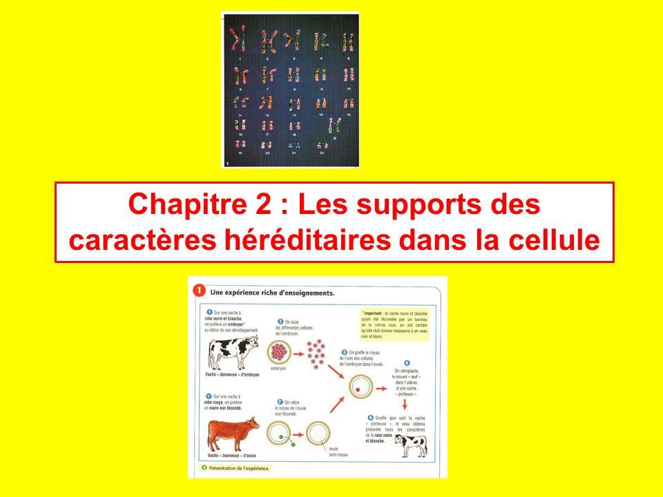 Chapitre 2 : Les supports des caractères héréditaires dans la cellule