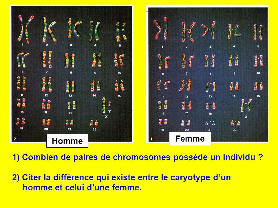 Femme Homme. 1) Combien de paires de chromosomes possède un individu