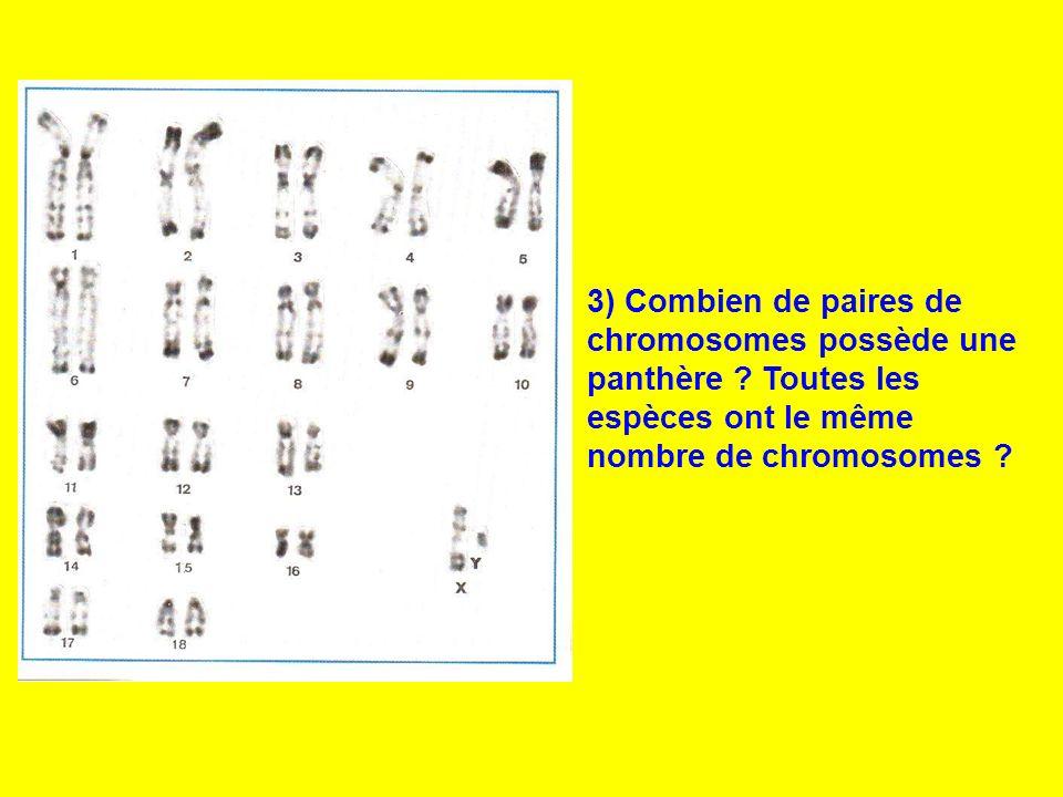 3) Combien de paires de chromosomes possède une panthère