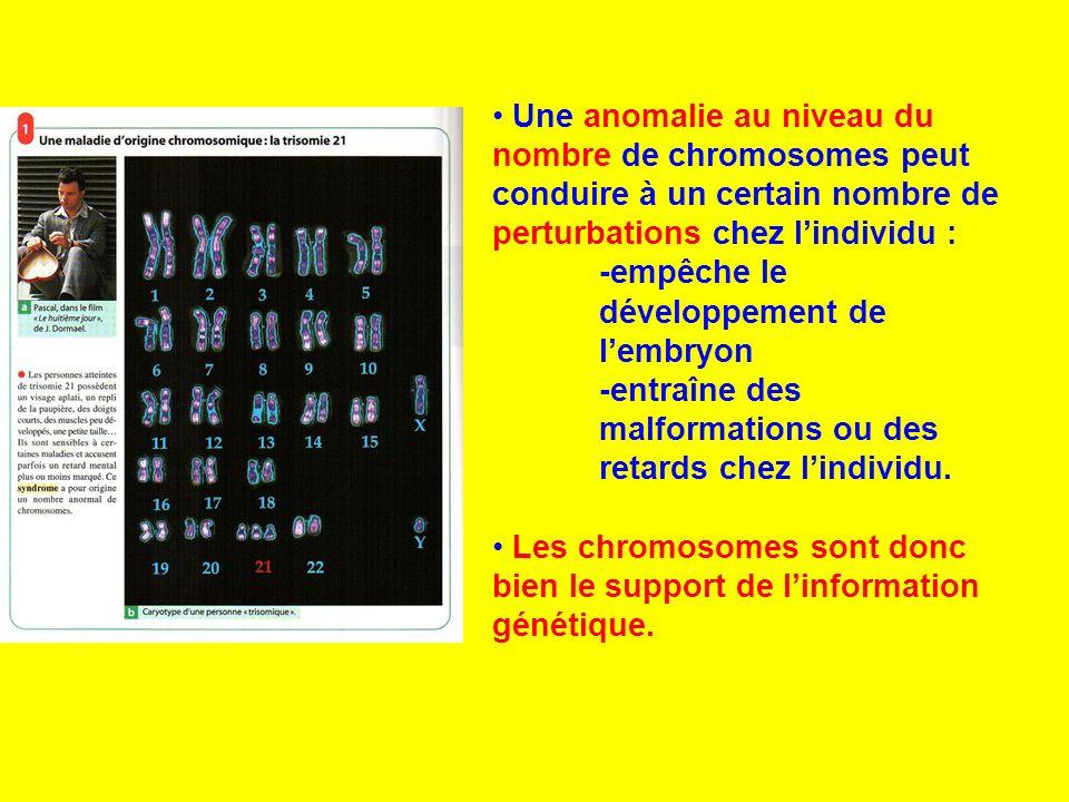 Une anomalie au niveau du nombre de chromosomes peut conduire à un certain nombre de perturbations chez l'individu :