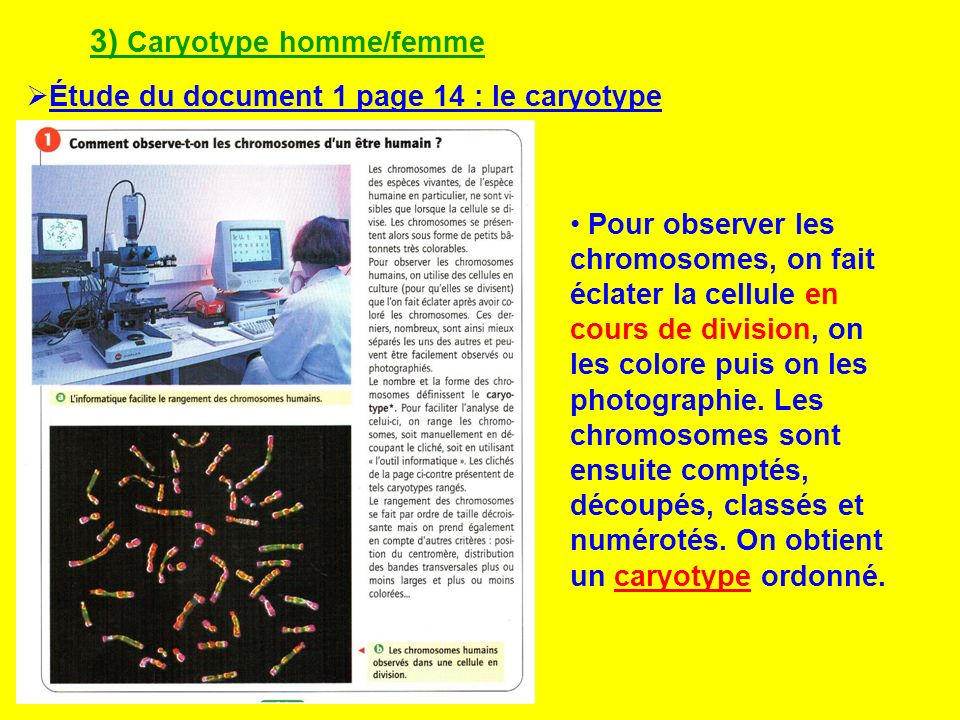3) Caryotype homme/femme