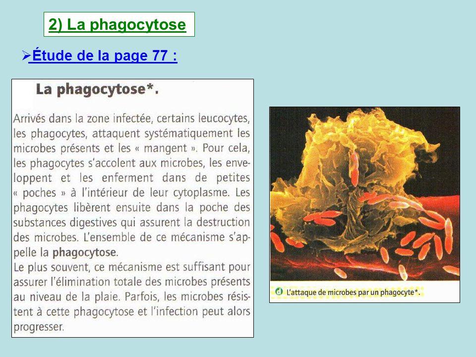 2) La phagocytose Étude de la page 77 :