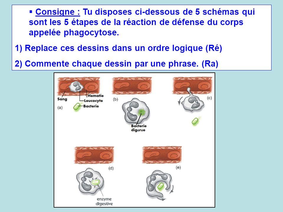 Consigne : Tu disposes ci-dessous de 5 schémas qui sont les 5 étapes de la réaction de défense du corps appelée phagocytose.