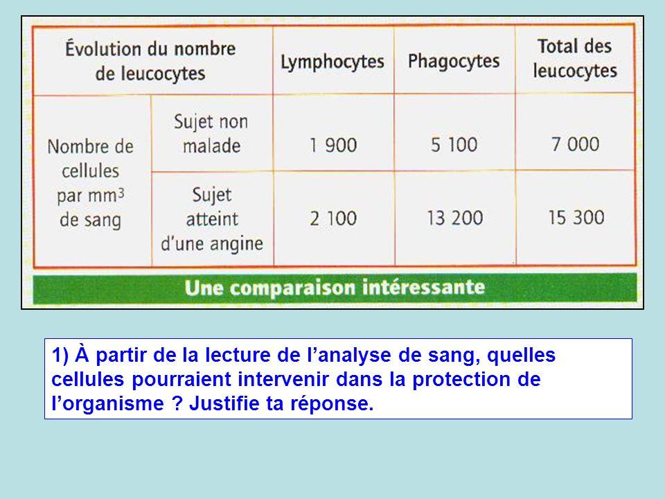 1) À partir de la lecture de l'analyse de sang, quelles cellules pourraient intervenir dans la protection de l'organisme .