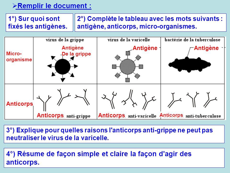 4°) Résume de façon simple et claire la façon d agir des anticorps.