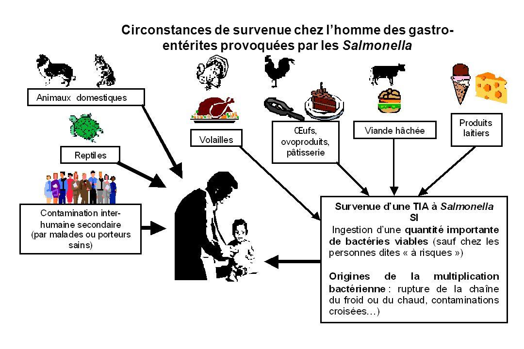 Circonstances de survenue chez l'homme des gastro-entérites provoquées par les Salmonella