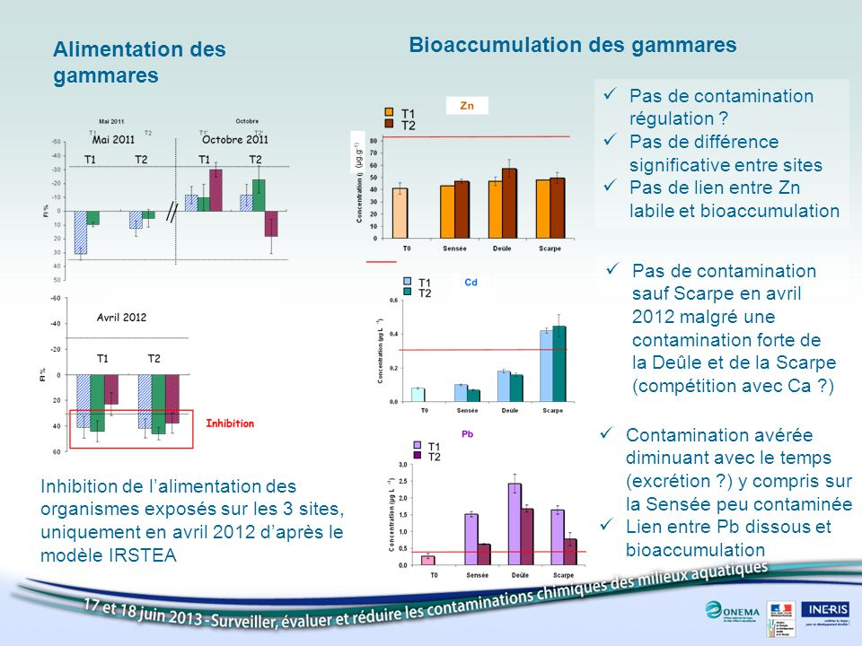Alimentation des gammares Bioaccumulation des gammares