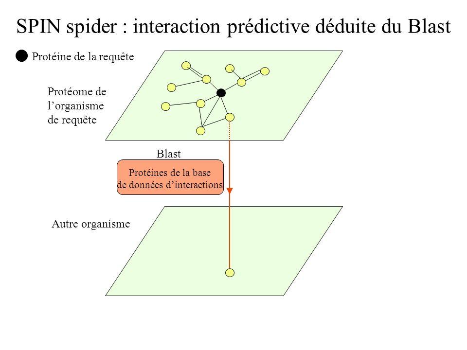 SPIN spider : interaction prédictive déduite du Blast