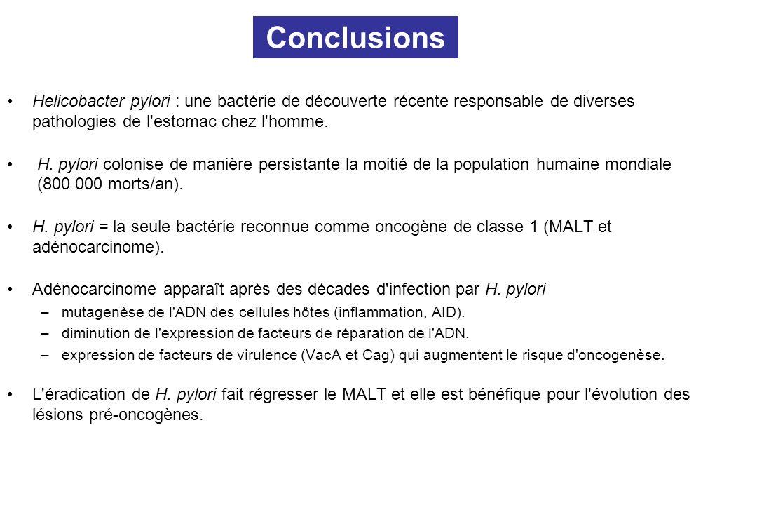 Conclusions Helicobacter pylori : une bactérie de découverte récente responsable de diverses pathologies de l estomac chez l homme.