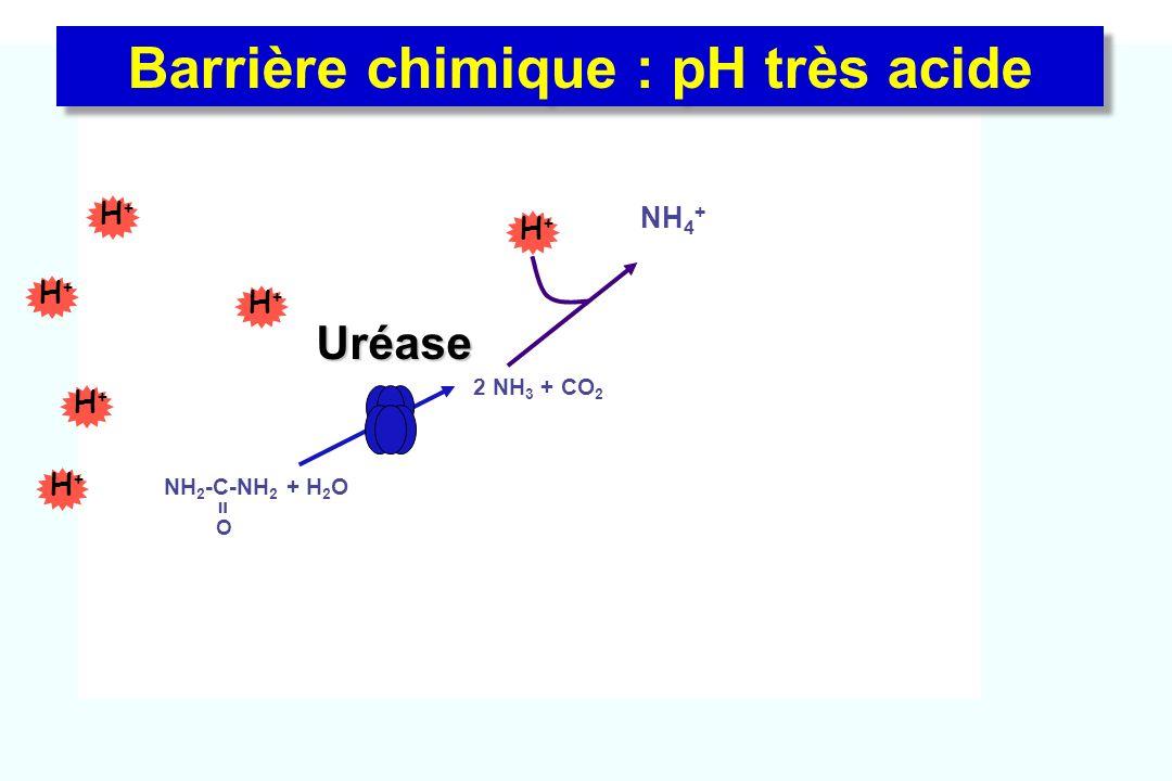 Barrière chimique : pH très acide