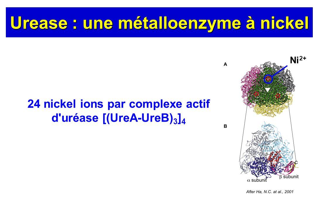 Urease : une métalloenzyme à nickel
