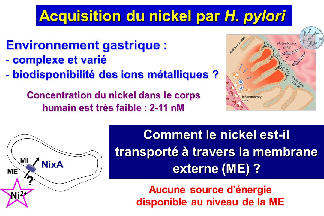 Concentration du nickel dans le corps humain est très faible : 2-11 nM