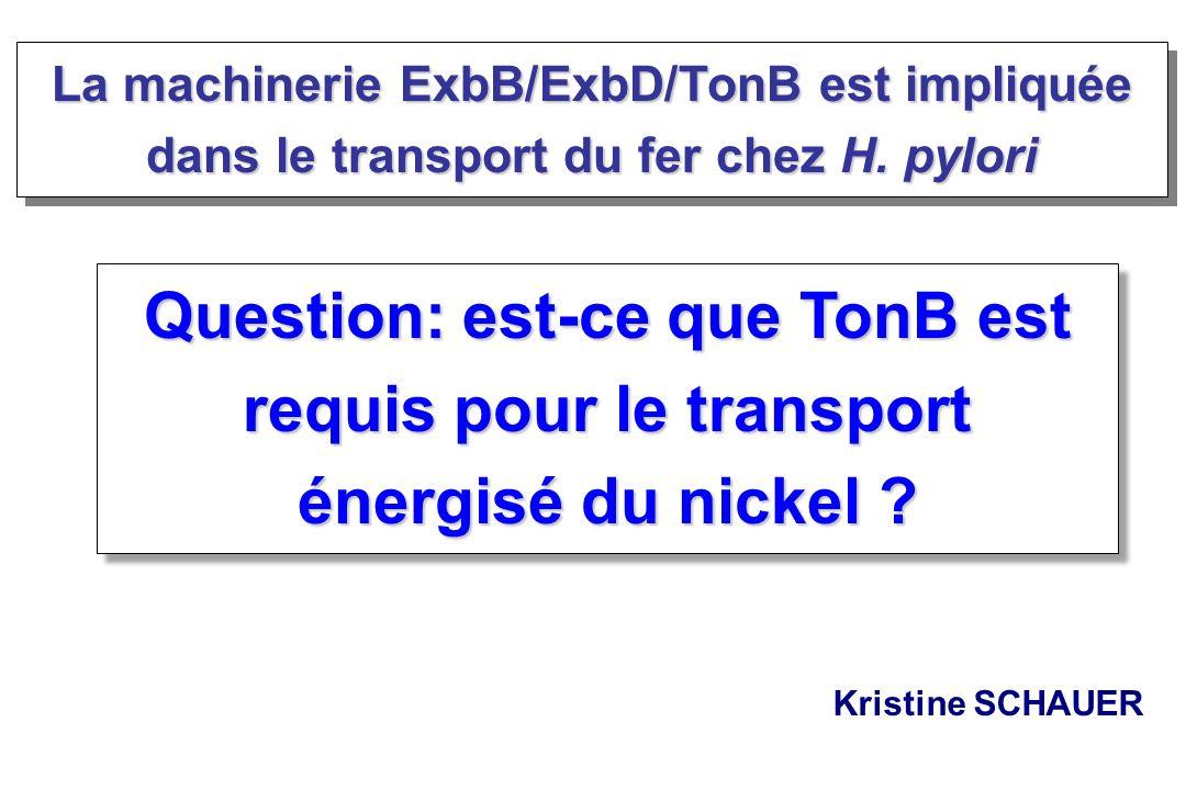 La machinerie ExbB/ExbD/TonB est impliquée dans le transport du fer chez H. pylori