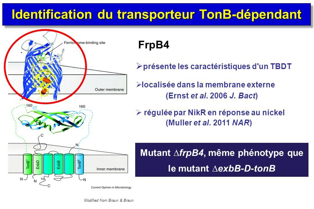 Identification du transporteur TonB-dépendant
