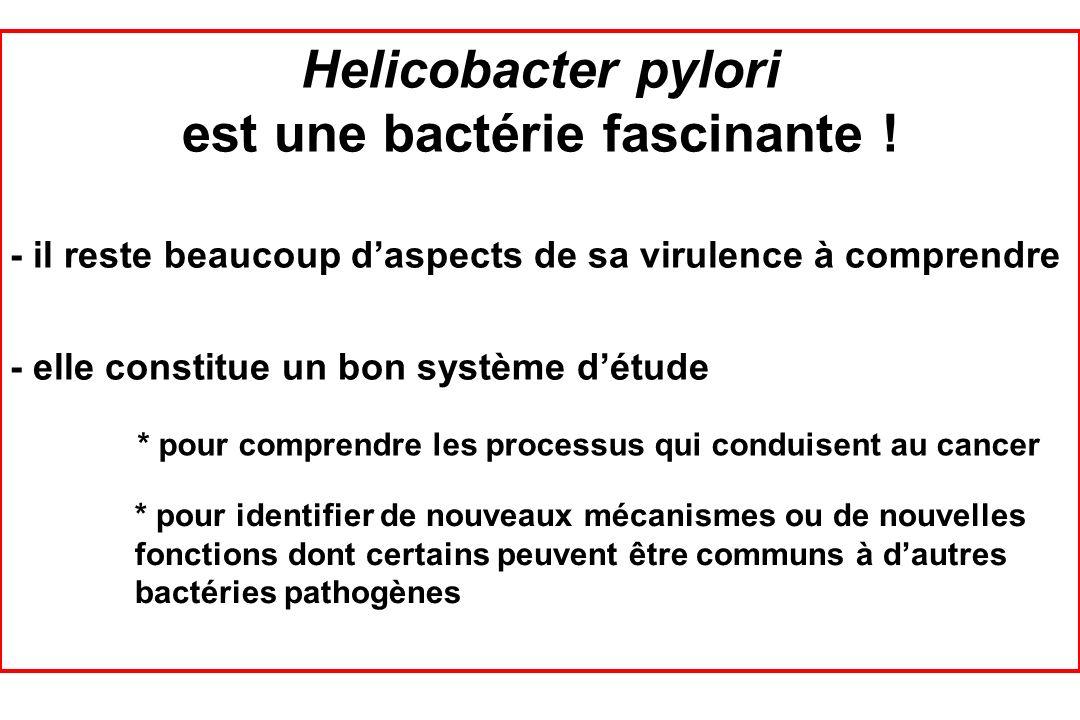 est une bactérie fascinante !