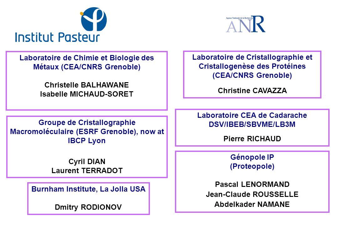 Laboratoire de Chimie et Biologie des Métaux (CEA/CNRS Grenoble)