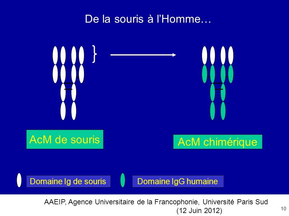De la souris à l'Homme… AcM de souris AcM chimérique