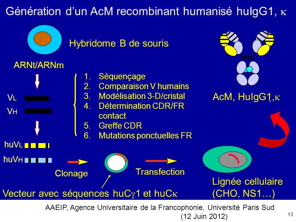 Génération d'un AcM recombinant humanisé huIgG1, 