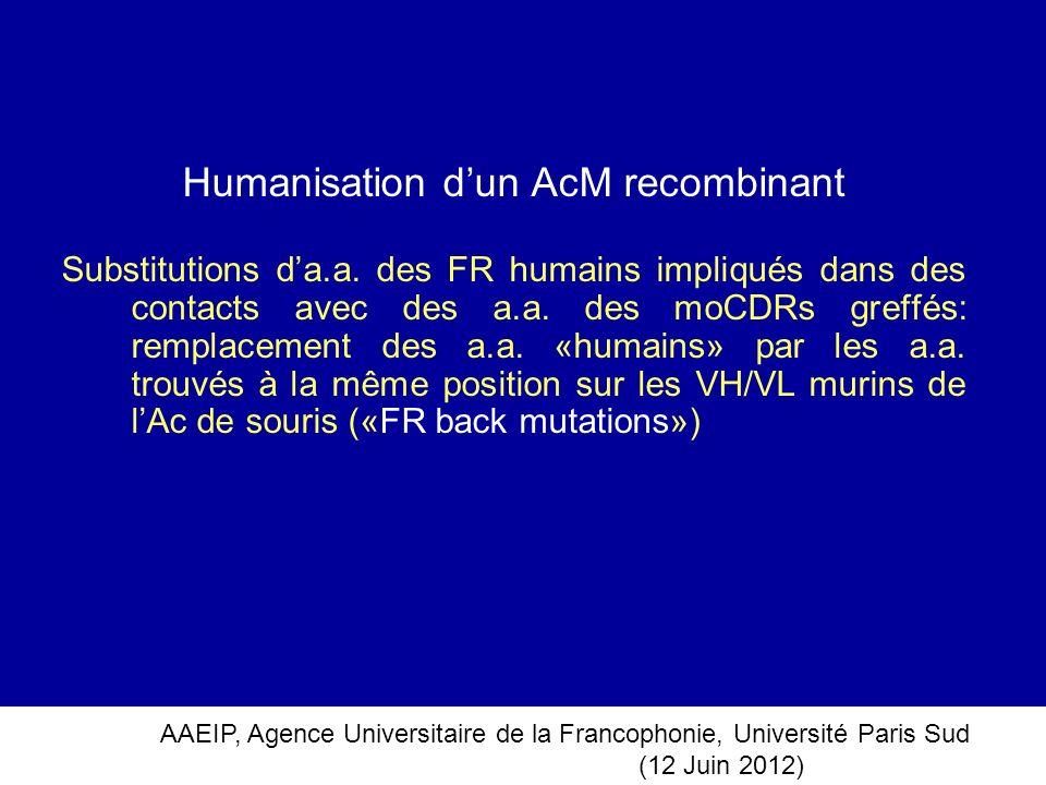 Humanisation d'un AcM recombinant