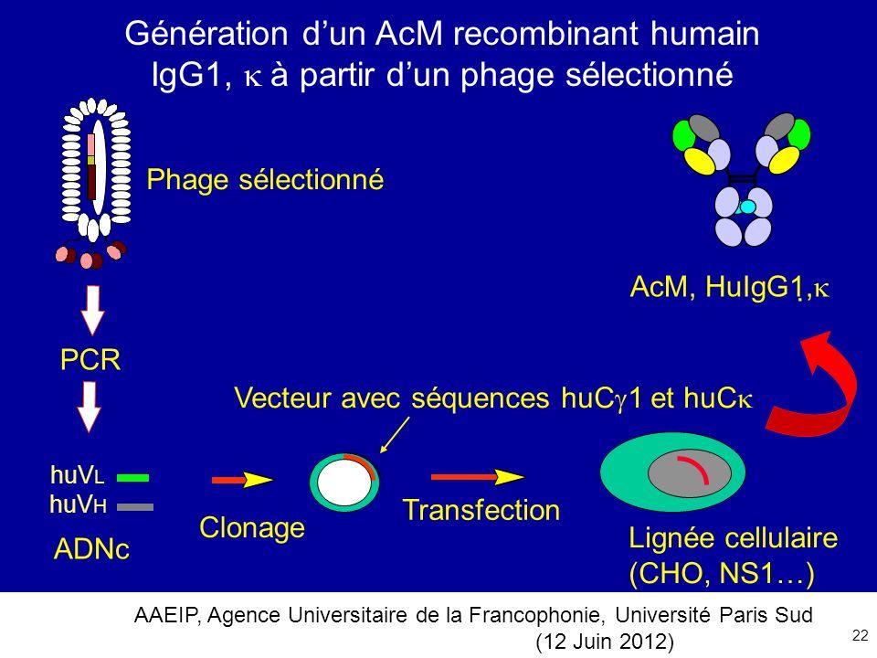 Génération d'un AcM recombinant humain