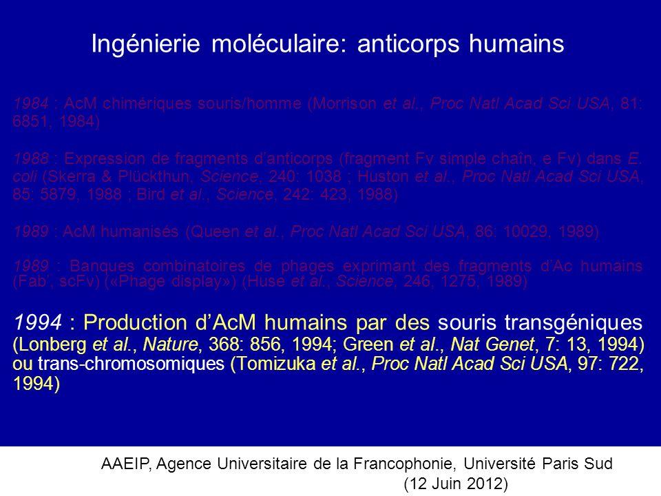 Ingénierie moléculaire: anticorps humains