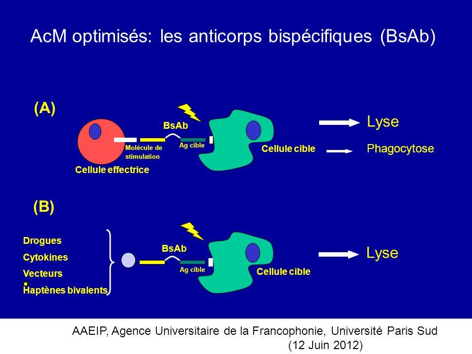 AcM optimisés: les anticorps bispécifiques (BsAb)