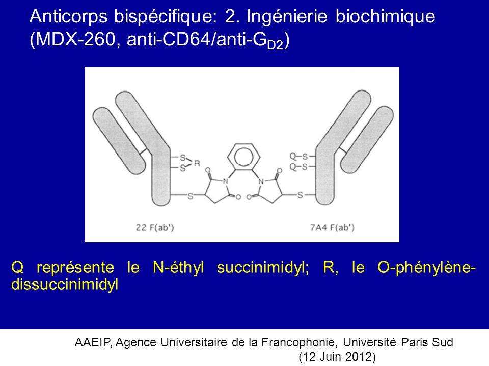 Anticorps bispécifique: 2