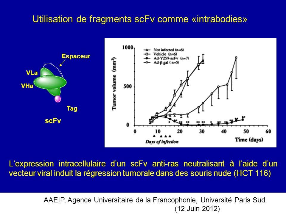 Utilisation de fragments scFv comme «intrabodies»