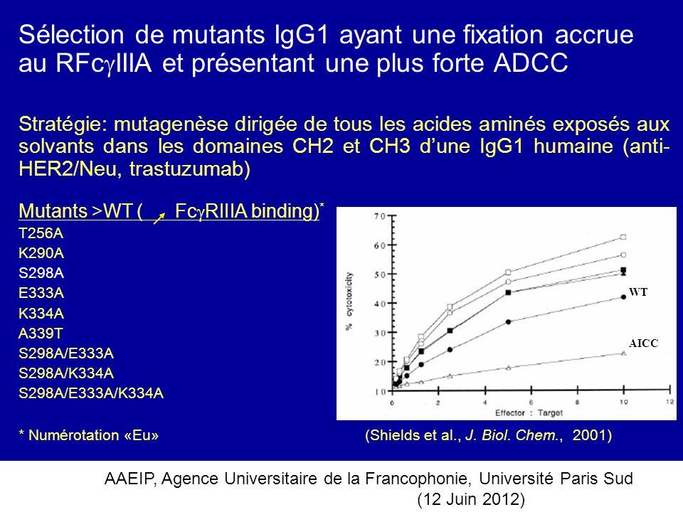 Sélection de mutants IgG1 ayant une fixation accrue au RFcIIIA et présentant une plus forte ADCC