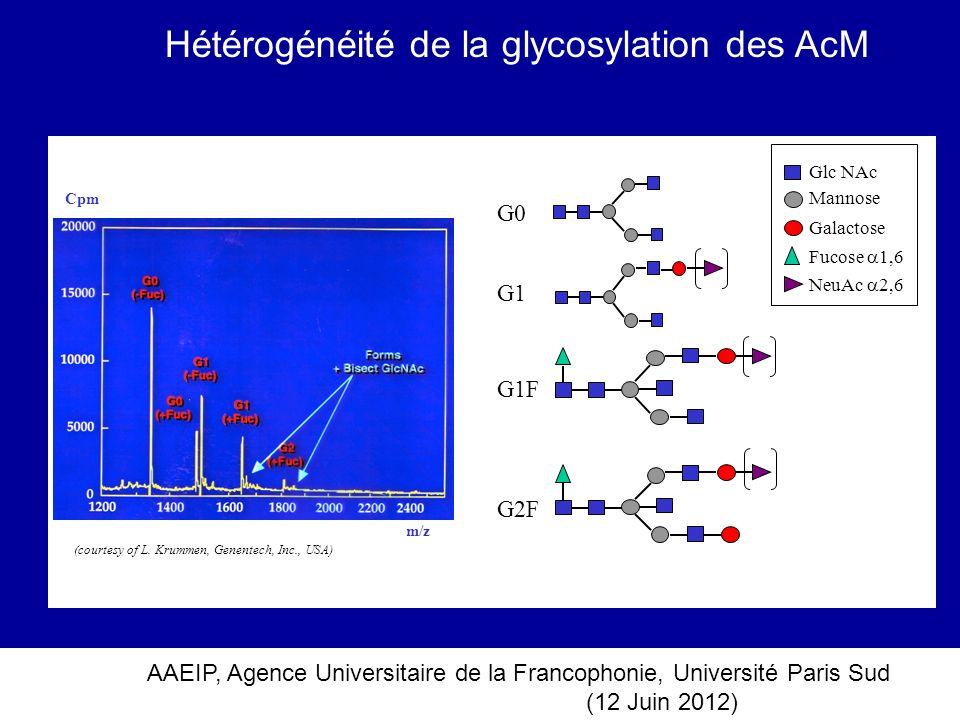 Hétérogénéité de la glycosylation des AcM