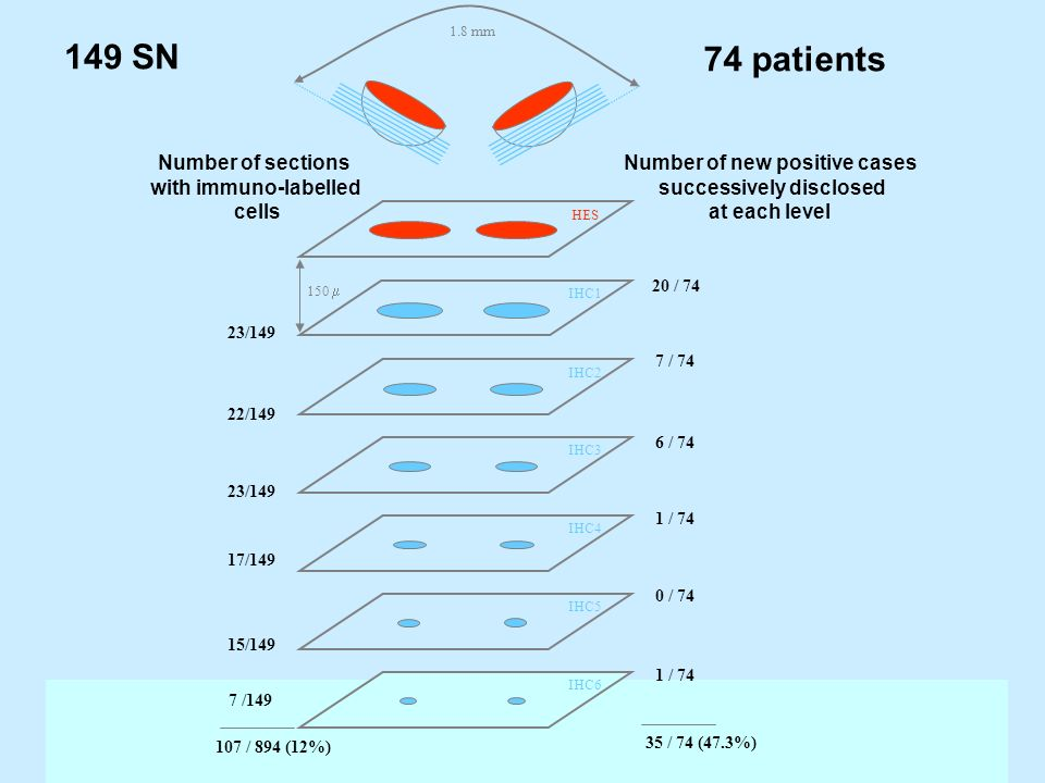149 SN 74 patients Number of sections with immuno-labelled cells