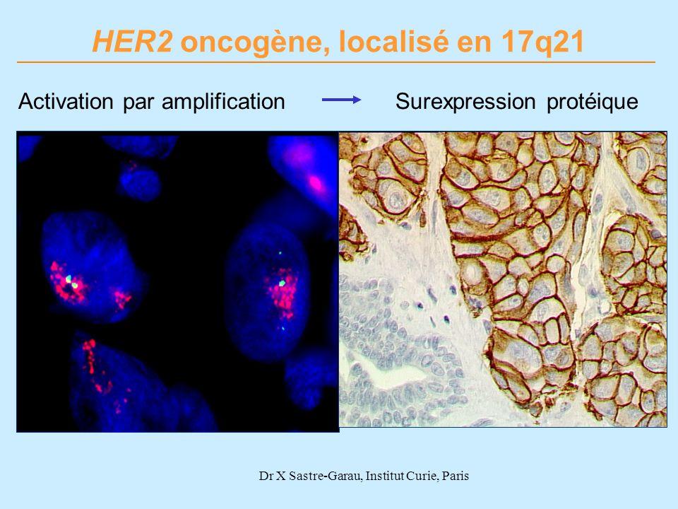 HER2 oncogène, localisé en 17q21