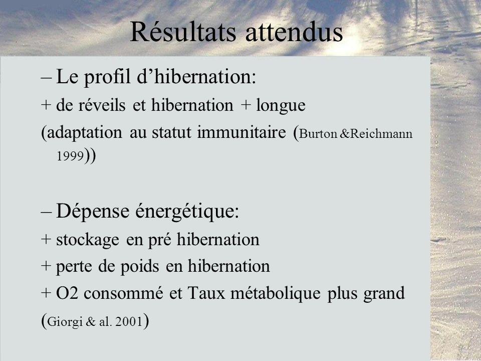 Résultats attendus Le profil d'hibernation: Dépense énergétique: