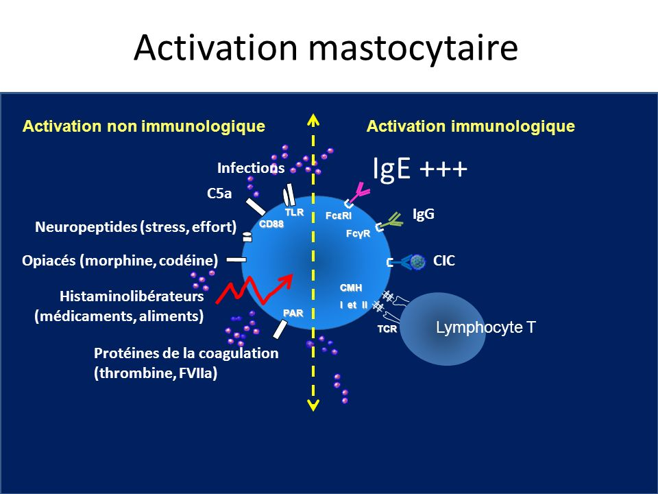 Activation mastocytaire