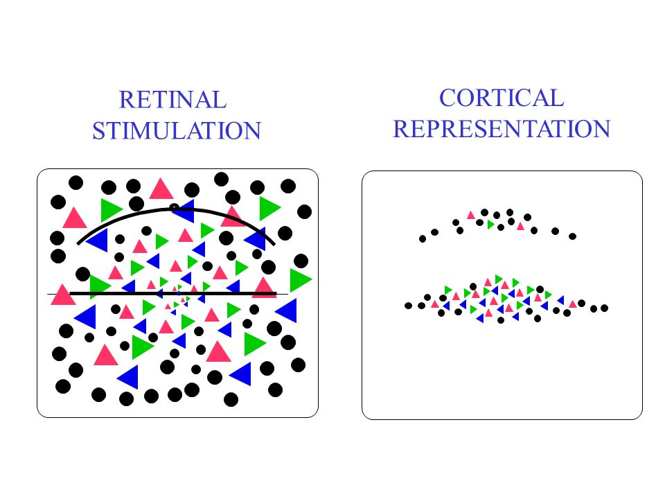 RETINAL STIMULATION CORTICAL REPRESENTATION
