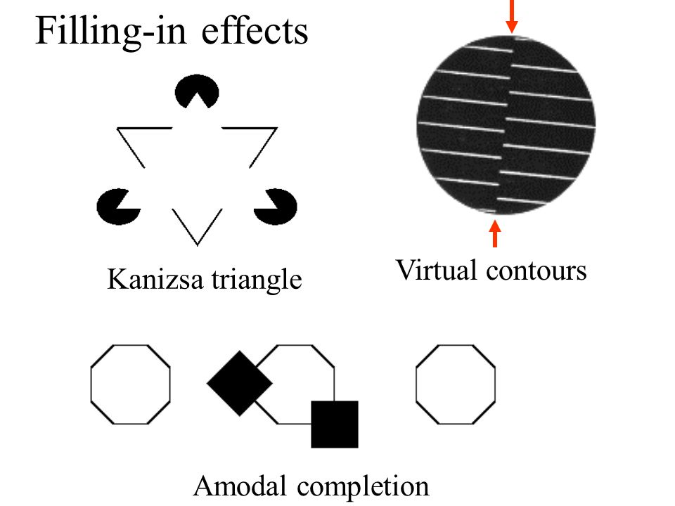 Filling-in effects Virtual contours Kanizsa triangle Amodal completion