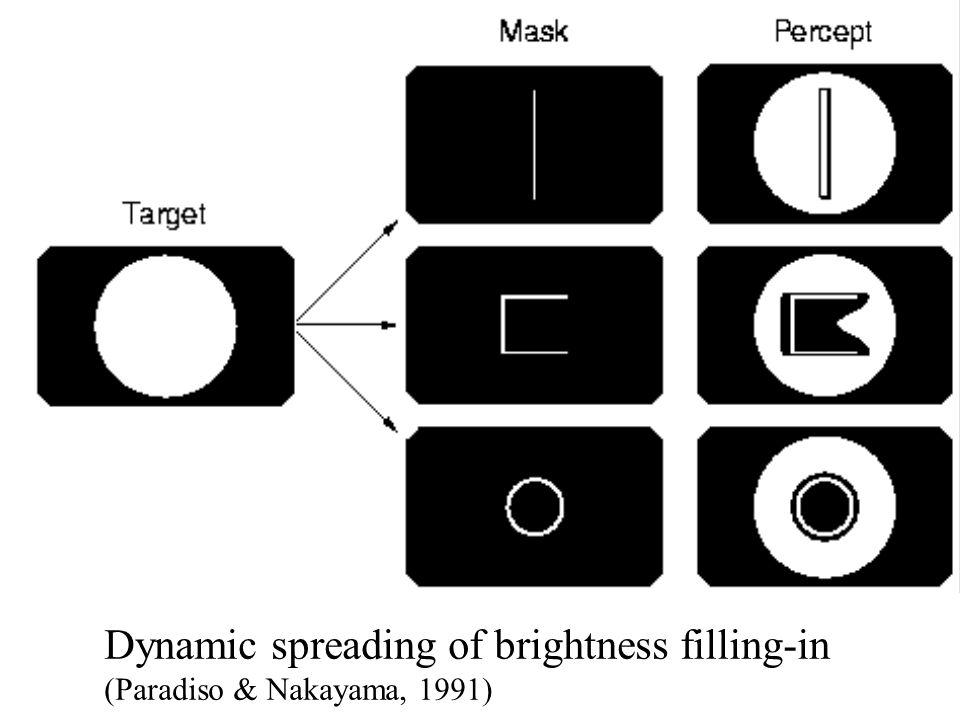 Dynamic spreading of brightness filling-in