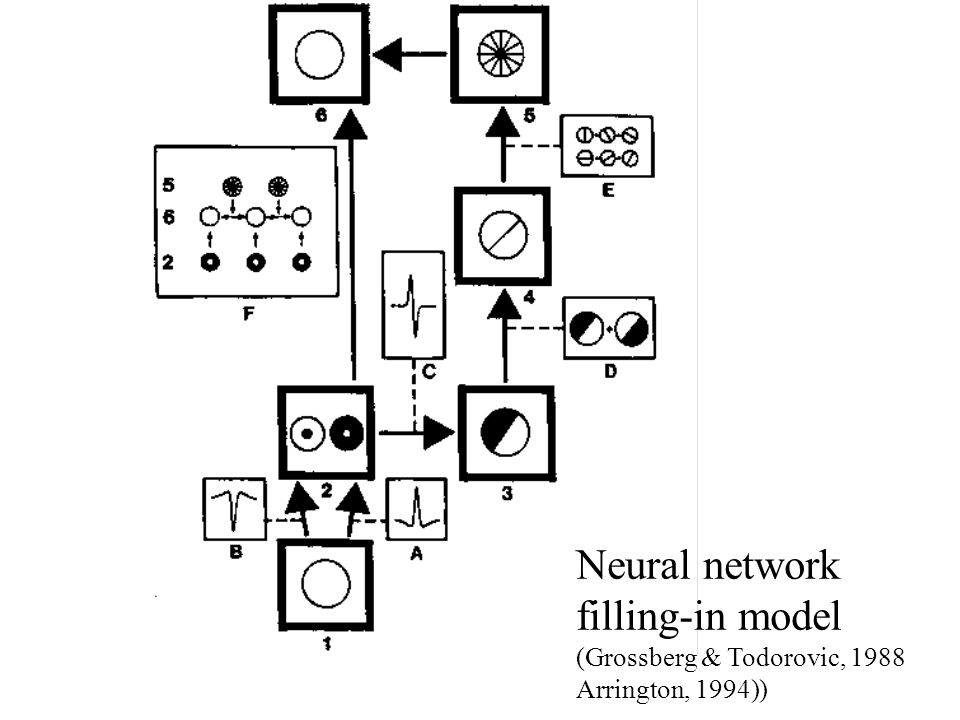 Neural network filling-in model (Grossberg & Todorovic, 1988