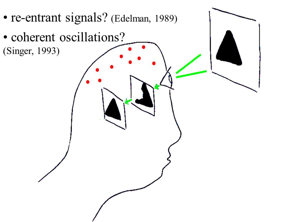 re-entrant signals (Edelman, 1989)