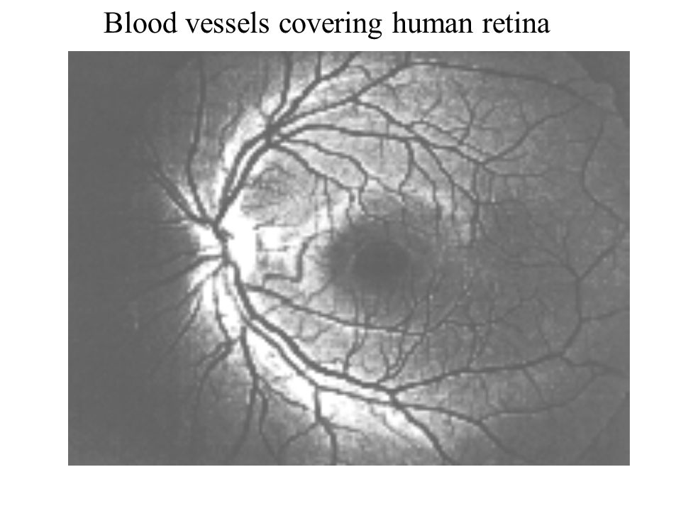 Blood vessels covering human retina