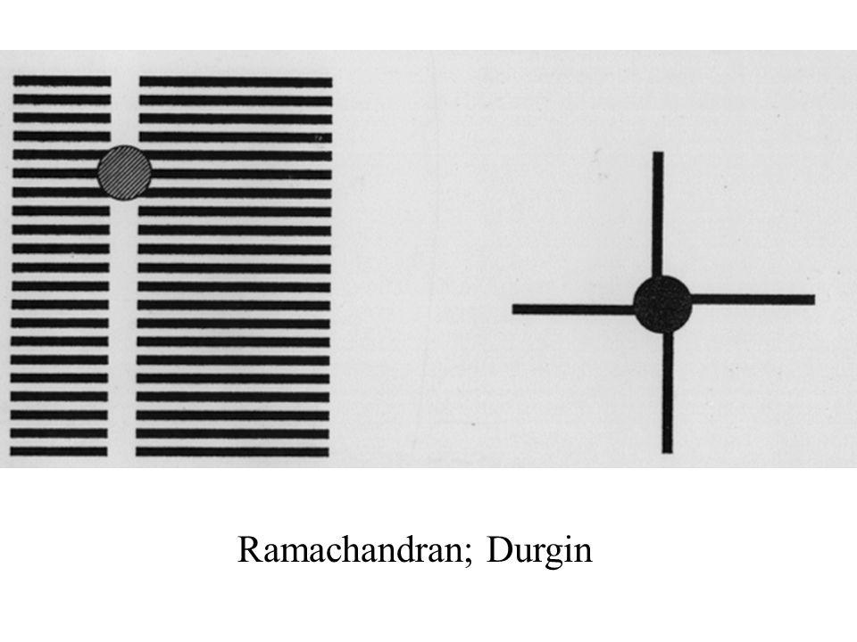 Ramachandran; Durgin