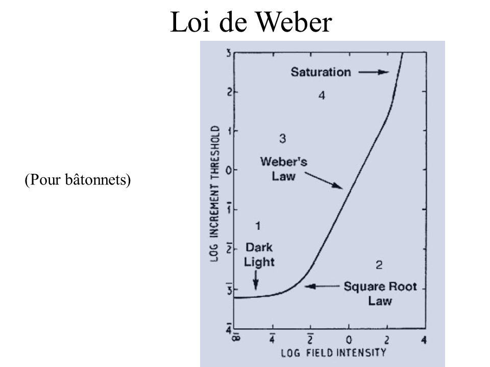 Loi de Weber (Pour bâtonnets)