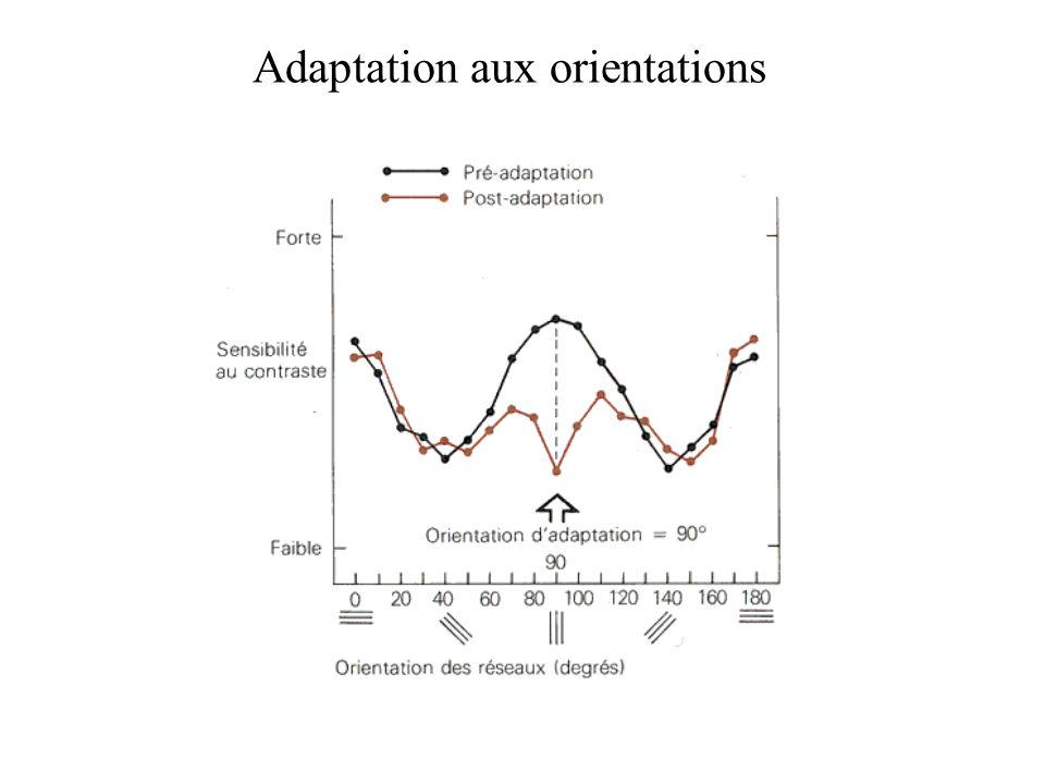 Adaptation aux orientations