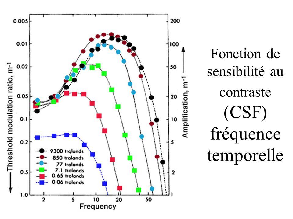 Fonction de sensibilité au contraste (CSF) fréquence temporelle