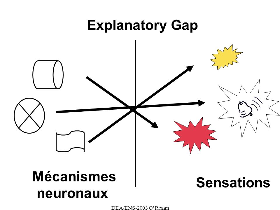 Explanatory Gap Mécanismes neuronaux Sensations