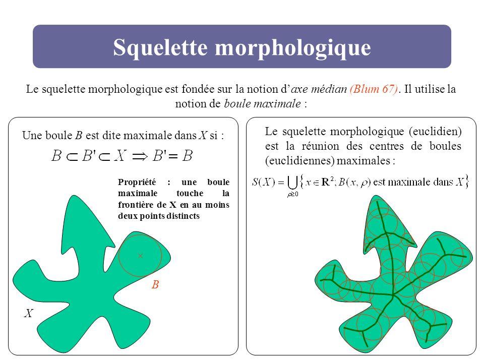 Squelette morphologique
