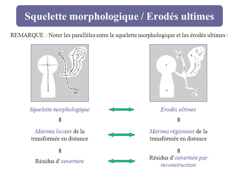 Squelette morphologique / Erodés ultimes
