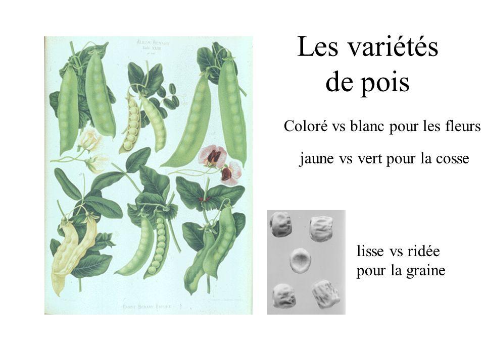 Les variétés de pois Coloré vs blanc pour les fleurs